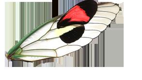 Kolaž koji spaja krilo nepoznatog zelenog kukca i krilo leptira.