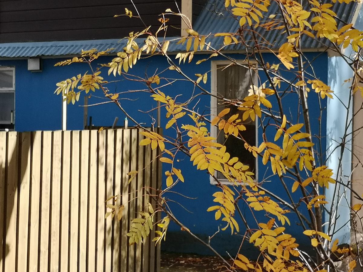 Žuto lišće na pozadini plave kuće