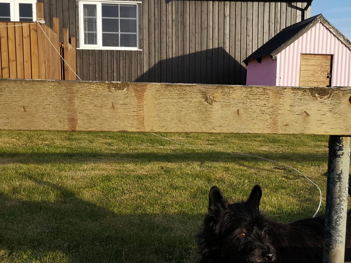 Crni pas na zelenoj tratini pred malom ružičastom kućom