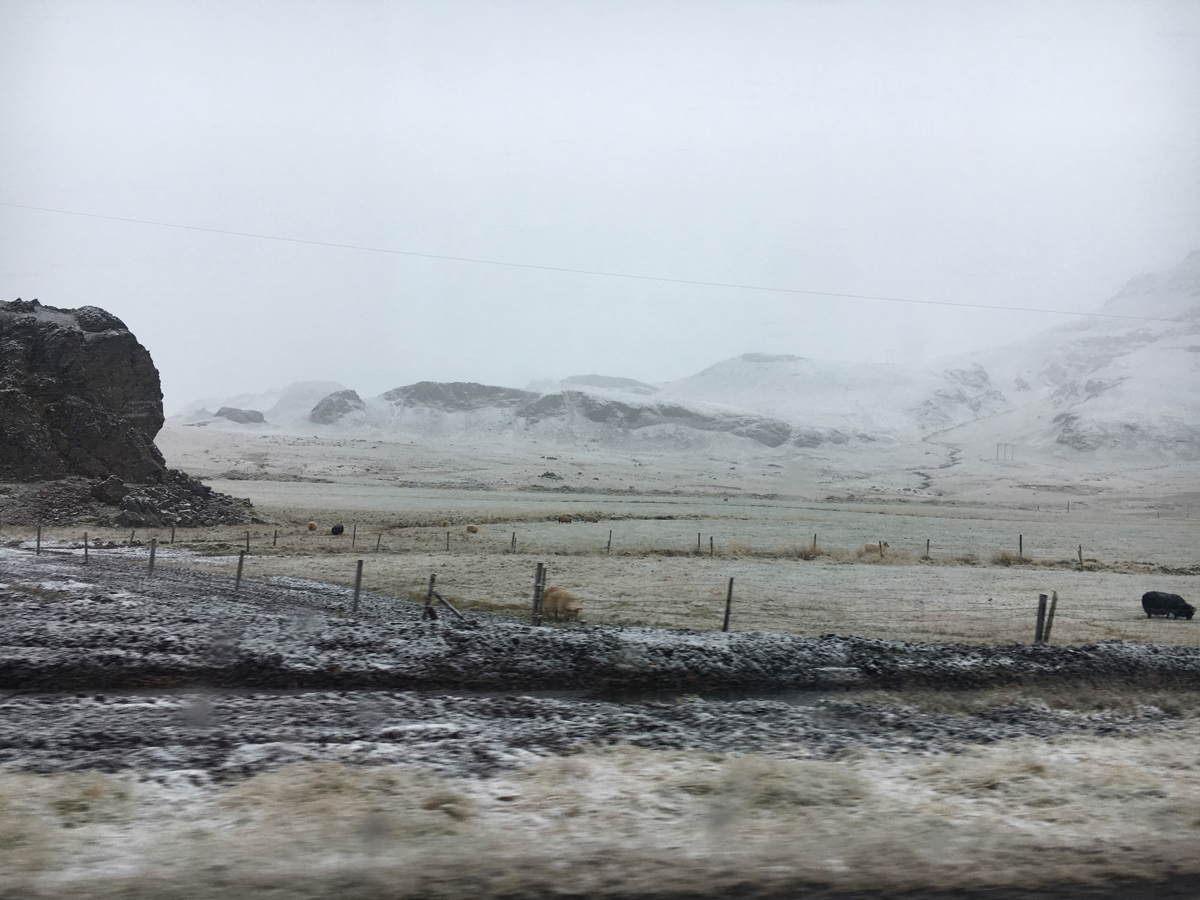 Snježni pejzaž s ovcama, planina u pozadini