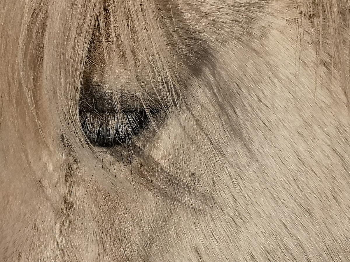 Oko bijelog konja