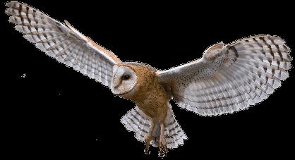 Sova raširenih krila