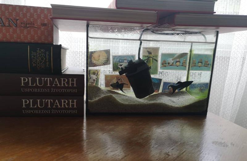 Akvarij s 3 ribe okružen knjigama
